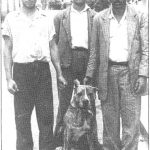 """El color bardino y blanco fue y es típico del presa canario. En la foto """"Marruecos"""", perro de pelea de la década de los cíncuenta."""