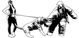 Rey Gladiador – Presa Canario KY, USA