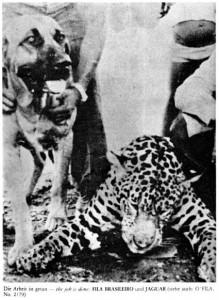 Fila Jaguar