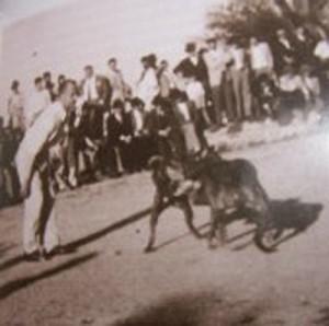 bild historia a dogfight3