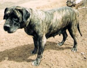 perro de piensos biona 209