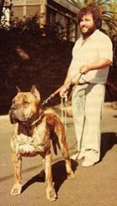 perro de presa canario 2283 ch.espana 1986