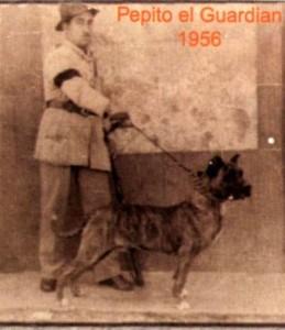 perro de presa canario 866 Pepito el Guardian