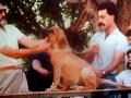 sultan(patagon-pregunta)-cachorro