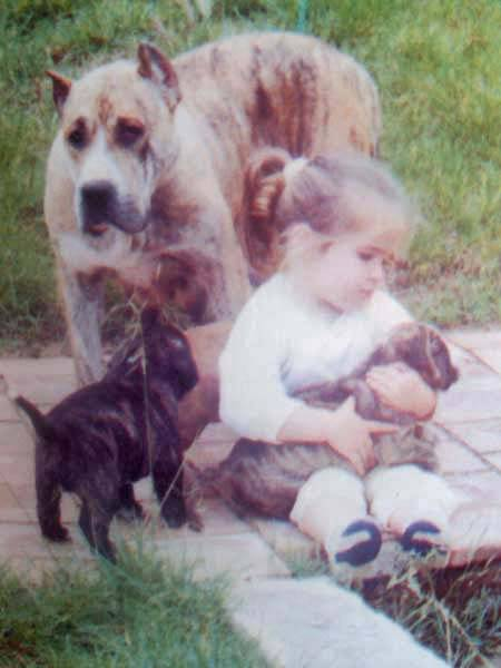 Mota - 1991 rok