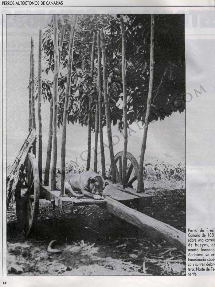 Los Perros en la Historia de Canarias 3