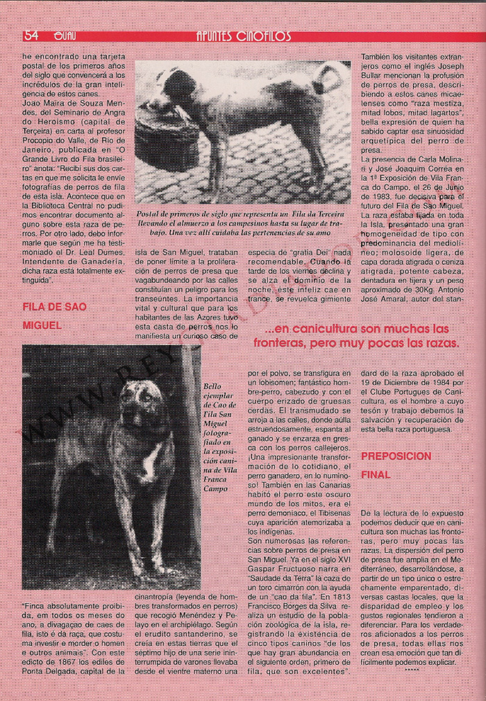 articulo ano 1990 revista guau