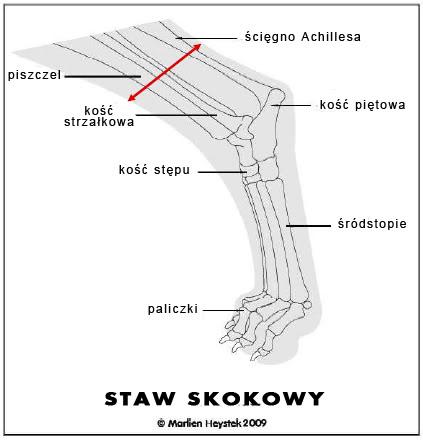 stawskokowybudowa