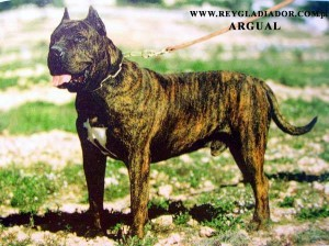 Year 1997 – the Current Profile of the Presa Canario