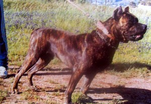 caporal(patagon-gubia) kopia
