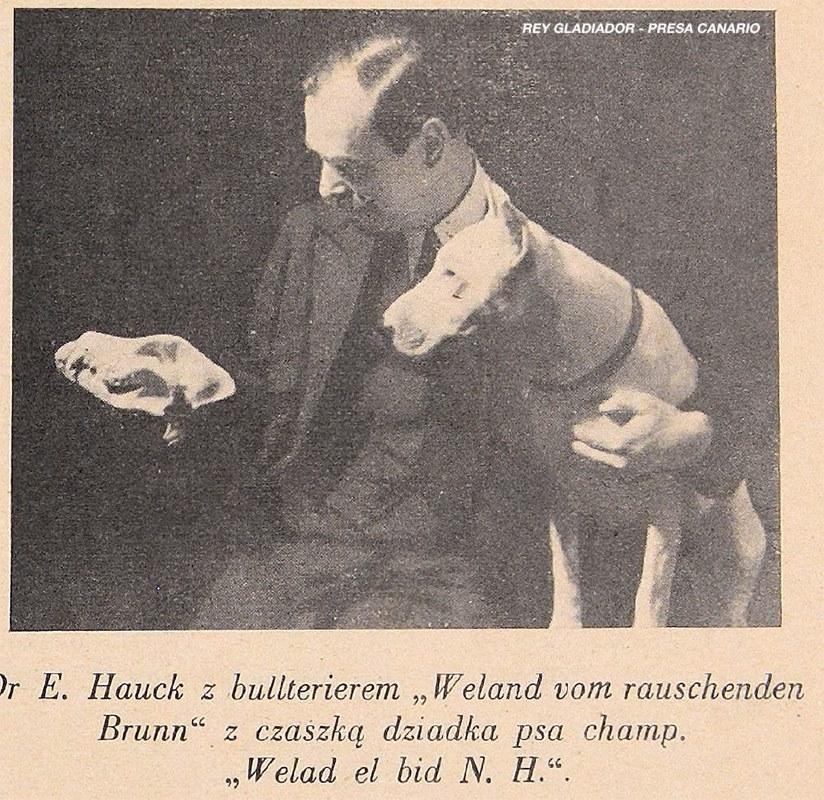 "Bullterier from polish magazin ""Moj Pies"" from year 1938"