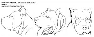 Breed standard: Presa Canario head