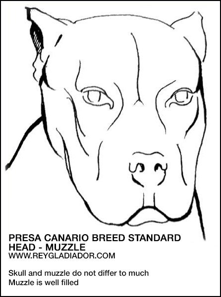 Breed standard: face and muzzle