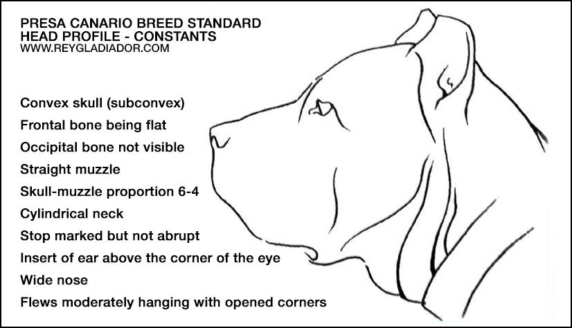Breed standard: skull