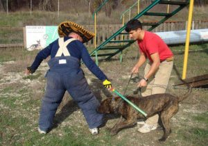 On working dogs