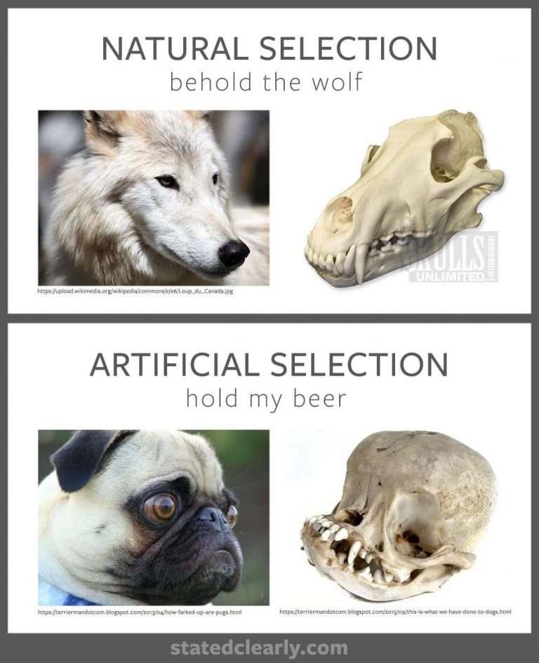 Read more about the article Natural selection vs artificial selection