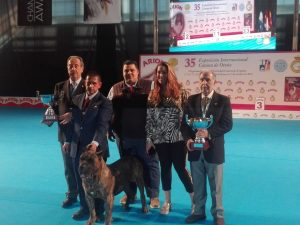 Dogo Canario best breed of all in Spain