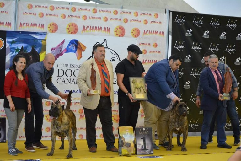 Read more about the article 27 Monografica of Dogo – Presa Canario, Tenerife, Canary Islands 2018