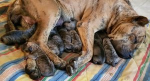 Jackel gave birth to 17 puppies! Video