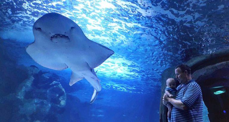 Read more about the article Newport Aquarium