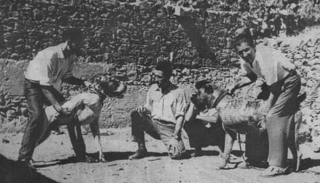 Old photos of Presa Canarios