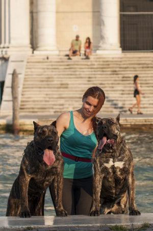 Rey Gladiador – show dogs