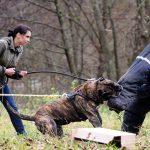 Rey Gladiador – working dogs