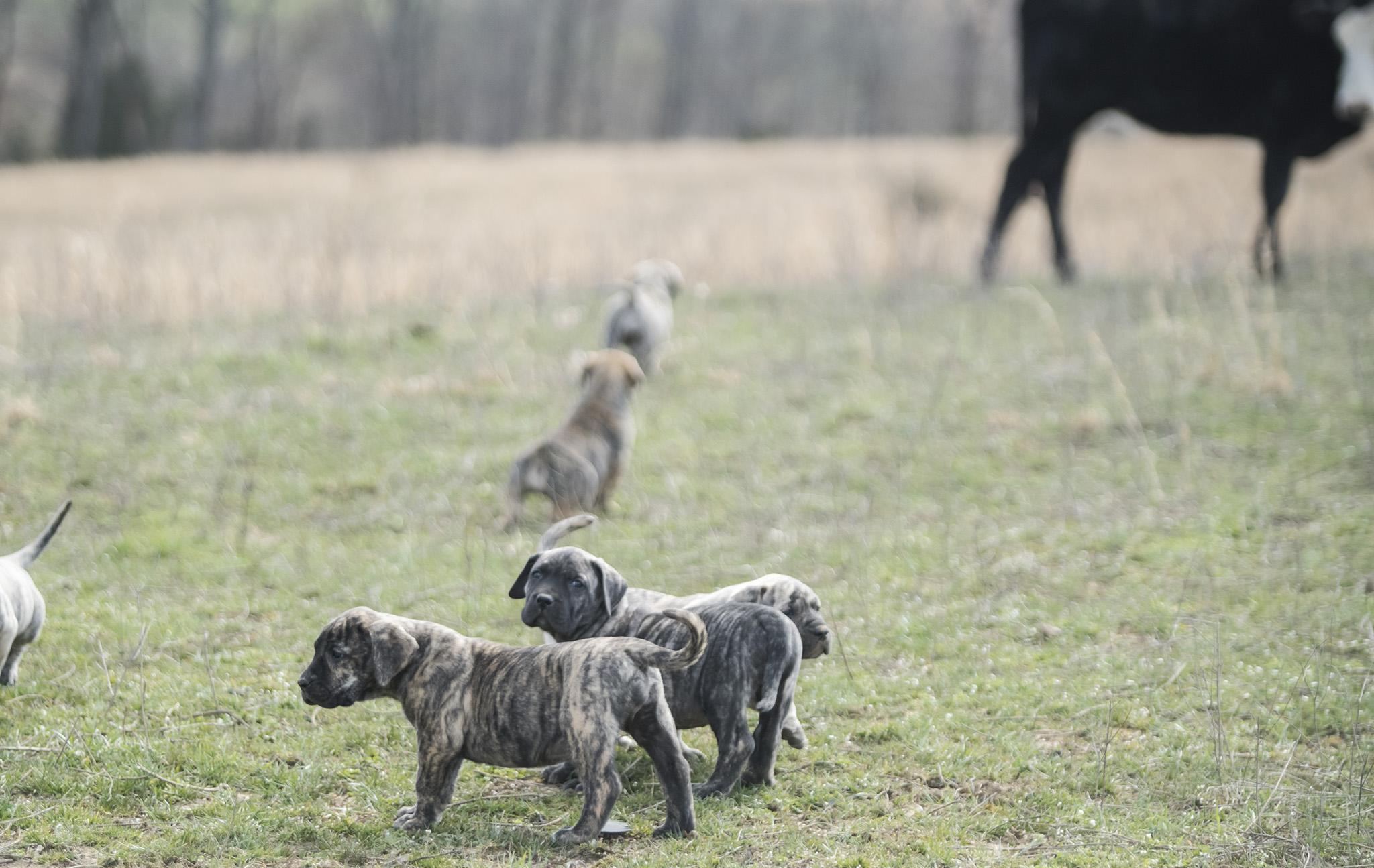 Puppies exploring the farm