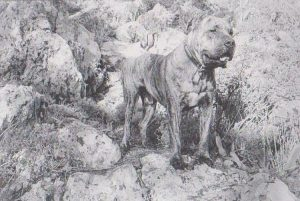 The Presa Canario and the Parallel Presas