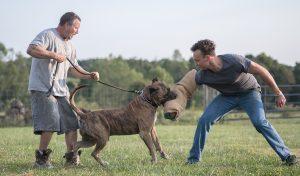 Hooch de Rey Gladiador – temperament test