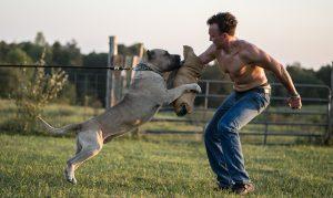 El Paye de Rey Gladiador – temperament test