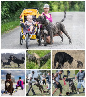 5 different challenge – easy when you have a total dog