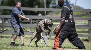 TECHNICAL VS TACTICAL WORKSHOP – PRESA CANARIO 5-6 of September 2020