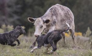 Tupi and Xixi on the farm