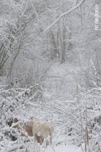 paye balto snieg
